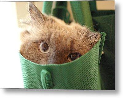 Jack In The Bag Metal Print