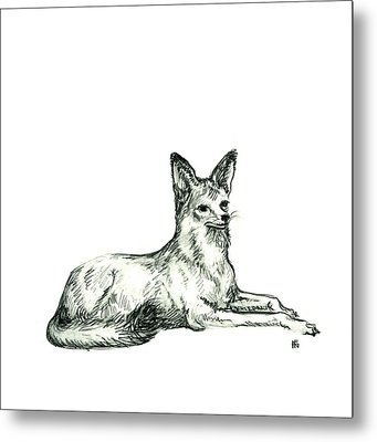 Jackal Sketch Metal Print by Shirley Heyn