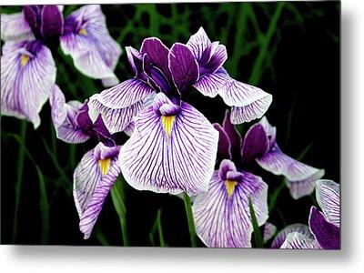 Japanese Water Iris In Purple 2714 H_2 Metal Print
