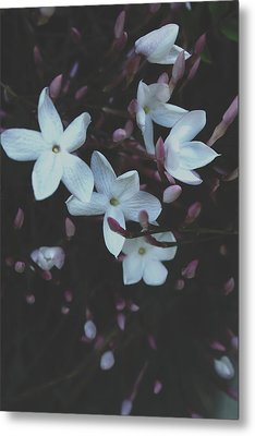Jasmine Dream- Photography By Linda Woods Metal Print