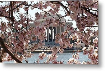 Jefferson Through The Cherry Blossoms Metal Print by Charles Kraus