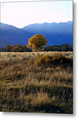 Judy's Tree Metal Print by Steven Holder