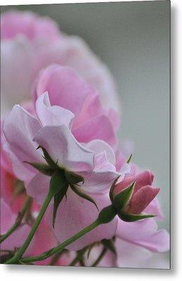 June Roses 2 Metal Print