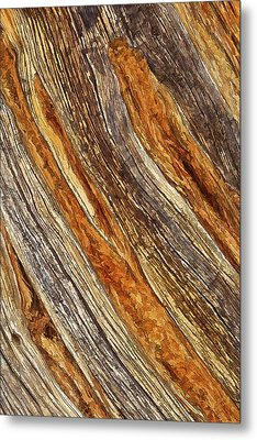 Juniper Texture Metal Print by ABeautifulSky Photography