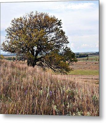 Kansas One Tree Hill Square Metal Print by Lee Craig