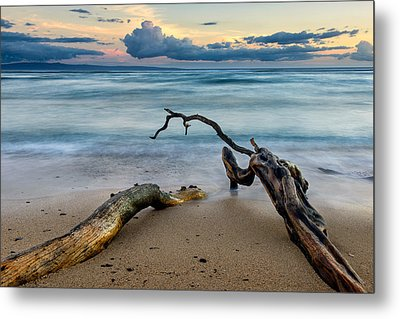Kiawe Metal Print by Doug Oglesby