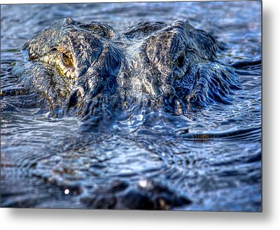 Metal Print featuring the photograph Killer Instinct by Mark Andrew Thomas
