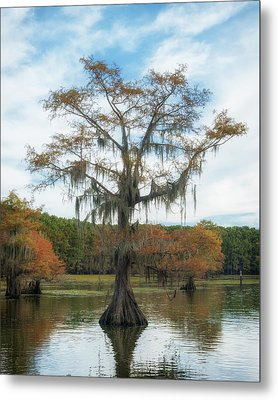 King Cypress Metal Print