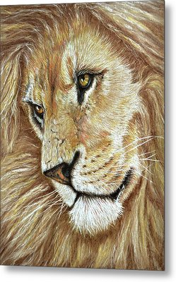 Metal Print featuring the drawing King Of The Jungle by Heidi Kriel