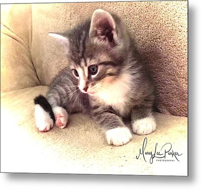 Kitten Deep In Thought Metal Print