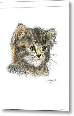 Kitten Metal Print by Bill Hubbard