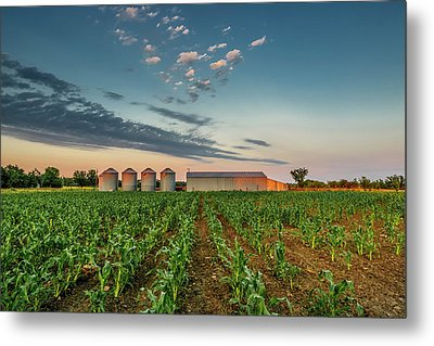 Knee High Sweet Corn Metal Print