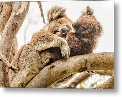 Koala 5 Metal Print by Werner Padarin