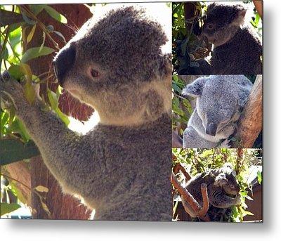 Metal Print featuring the photograph Koalas Unite by Amanda Eberly-Kudamik