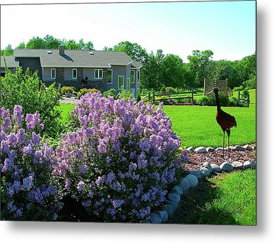 Korean Lilacs And Sandhill Crane Metal Print by Randy Rosenberger