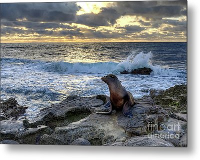 Metal Print featuring the photograph La Jolla Sea Lion by Eddie Yerkish