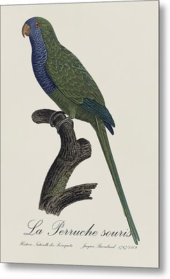 La Perruche Souris / Monk Parakeet- Restored 19th Century Illustration By Jacques Barraband  Metal Print