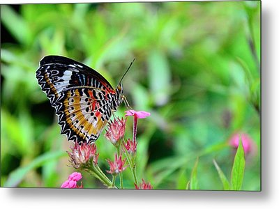Metal Print featuring the photograph Lace Wing Butterfly by Corinne Rhode