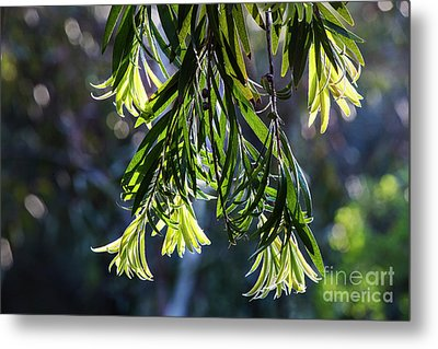 Lacey Leaves Metal Print