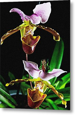 Metal Print featuring the photograph Lady Slipper Orchid by Elf Evans