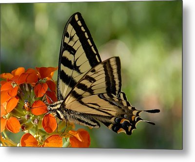 Ladybug And Tigertail Metal Print by David Lee Thompson