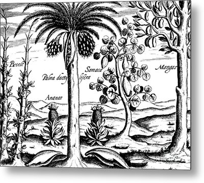 Landscape, Illustration From India Orientalis, 1598  Metal Print