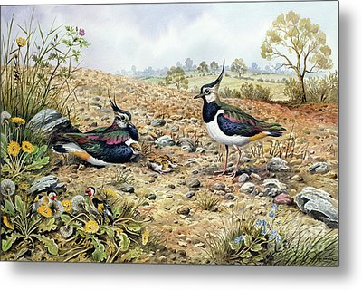 Lapwing Family With Goldfinches Metal Print by Carl Donner