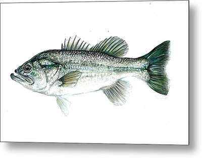 Large Mouth Bass Metal Print by Jim  Romeo