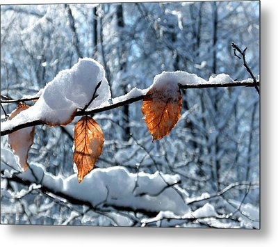 Last Leaves Metal Print by Karen Stahlros