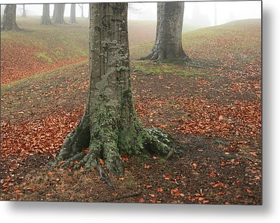 Last Leaves Of Autumn Metal Print by Terry Perham