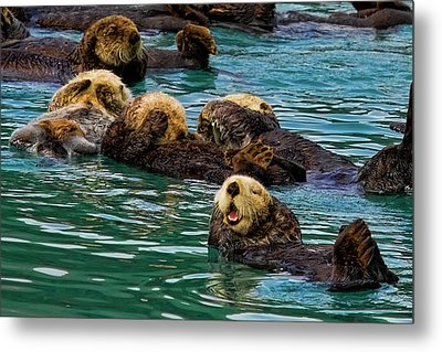 Laugh It Up Metal Print by David Wagner