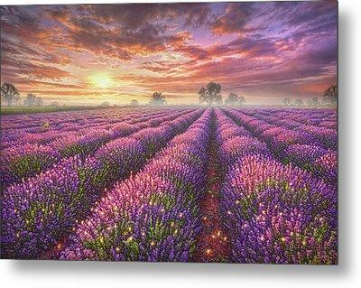 Lavender Field Metal Print