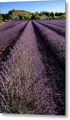 Lavender Field Provence France Metal Print