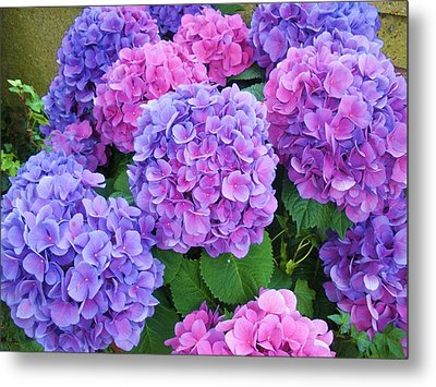 Lavender On My Mind Metal Print by Jeanette Oberholtzer