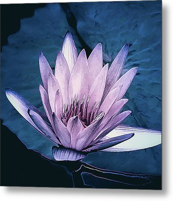 Lavender Water Lily  Metal Print by Julie Palencia