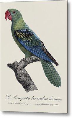 Le Perroquet A Bec Couleur De Sang / Great-billed Parrot - Restored 19thc. Illustration By Barraband Metal Print