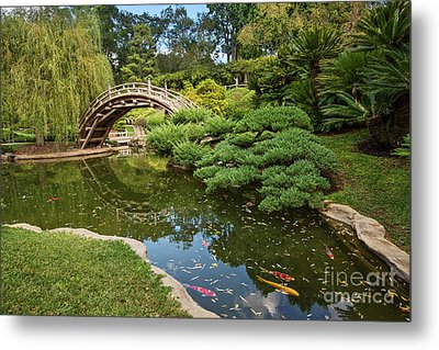 Lead The Way - The Beautiful Japanese Gardens At The Huntington Library With Koi Swimming. Metal Print