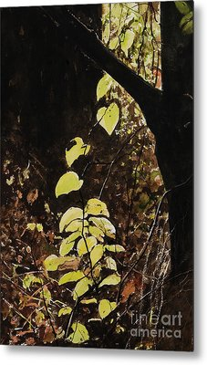 Leaf Glow Metal Print by Carla Dabney