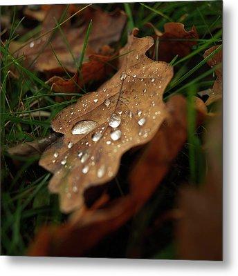 Leaf In Autumn. Metal Print by Bernard Jaubert
