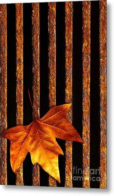 Leaf In Drain Metal Print
