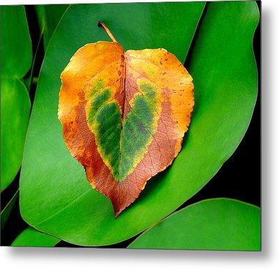 Leaf Leaf Heart Metal Print by Renee Trenholm