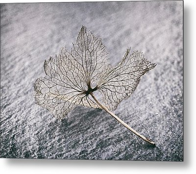 Leaf Skeleton Metal Print by Karen Stahlros