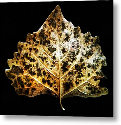 Leaf With Green Spots Metal Print by Joseph Frank Baraba