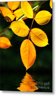 Leafs Over Water Metal Print