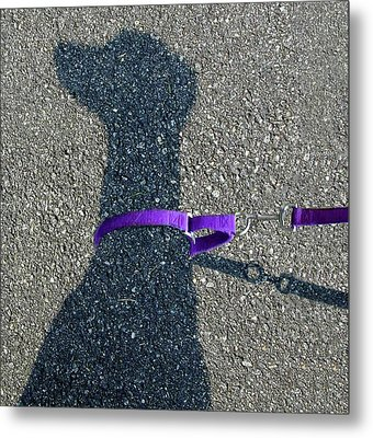 Leash Required On Sunny Days Metal Print