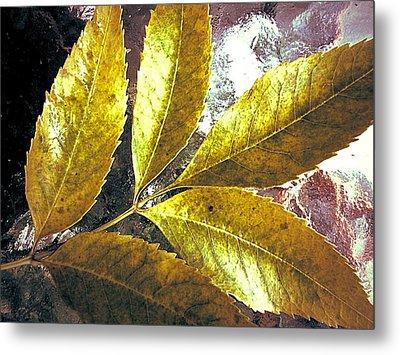 Leaves Of Gold Metal Print by Beth Akerman