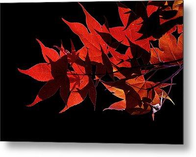 Leaves Of Red Metal Print by Heather Applegate