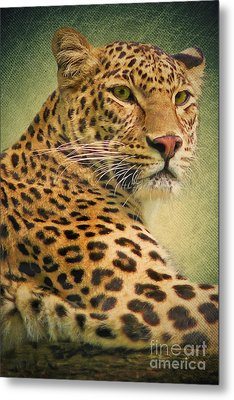Leopard Metal Print by Angela Doelling AD DESIGN Photo and PhotoArt