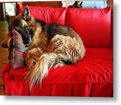 Let Sleeping Dogs Lie Metal Print