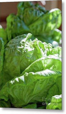 Lettuce For The Blt Metal Print